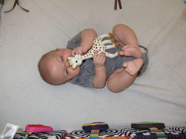 sophie the giraffe - 3