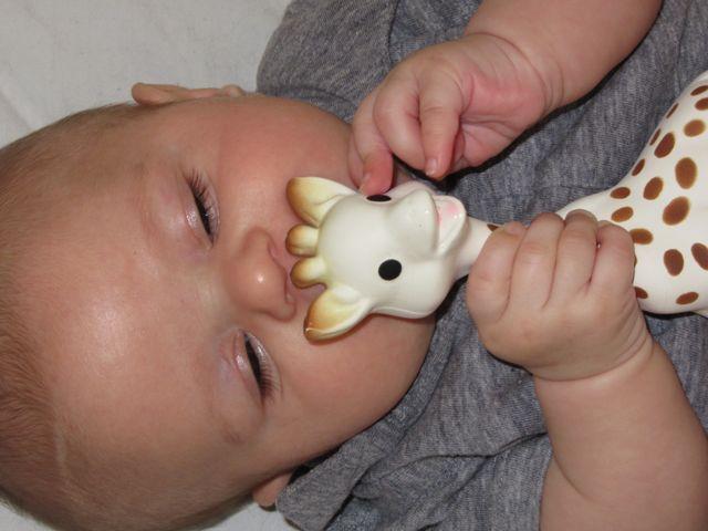 sophie the giraffe - 4