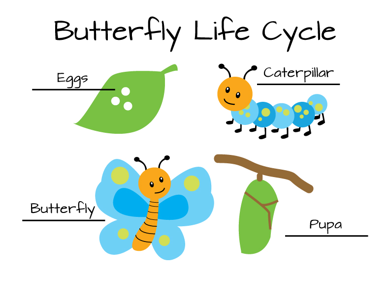 Life Cycle Kids Craft