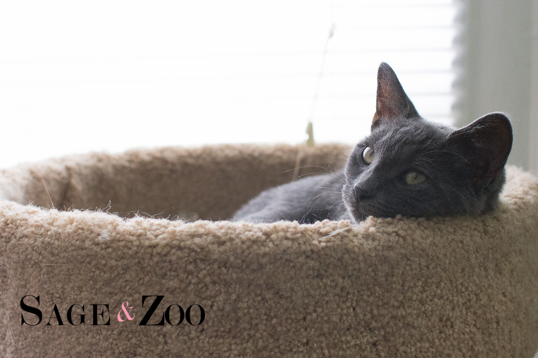 Luna (1 of 1)