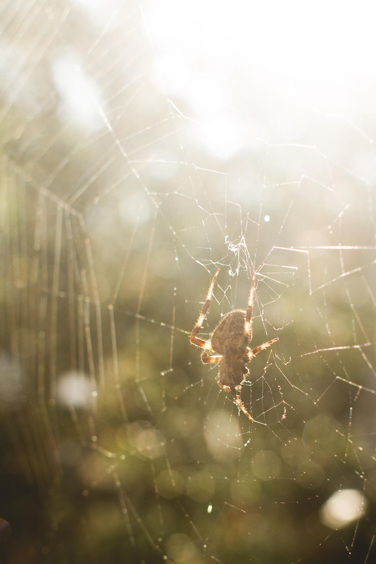 Spider in the morning sun