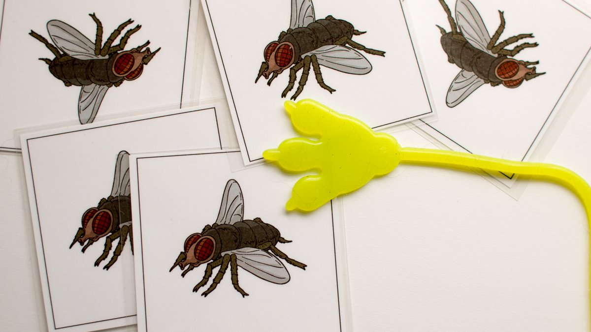 Sticky Fly